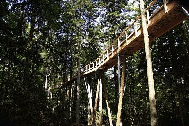 巴伐利亚国家森林公园的奇趣树塔