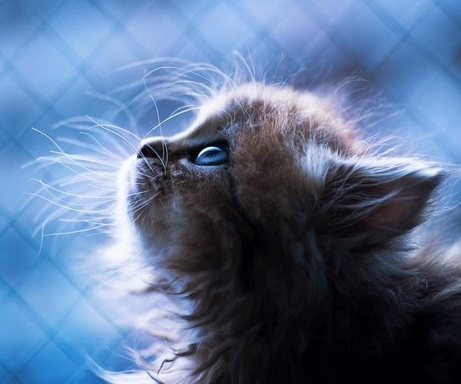 动物风情:世界上最可爱的小猫咪