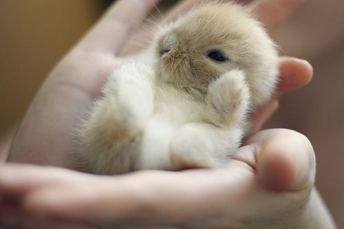智利火山喷发摄影图片 可爱图片:爱背书包的小兔子 野果霜花唯美壁纸