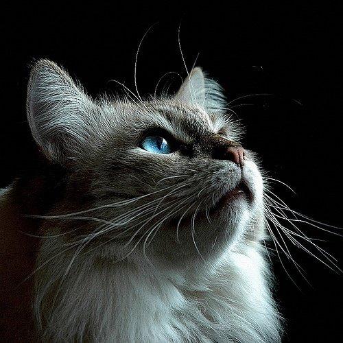宠物图片:仰望天空的猫
