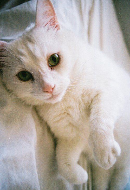 嘿,如此可爱的小猫咪你喜欢么?_小清新