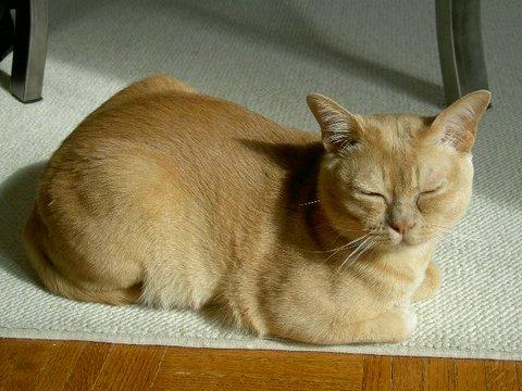 宠物图片:揣手的猫星人