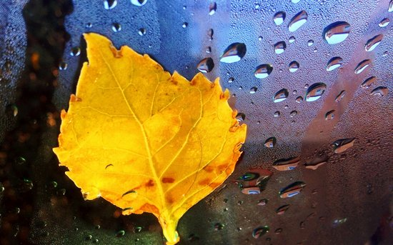秋天的落叶壁纸图片图片