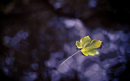 秋天的落叶壁纸图片